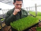 塑料大棚黄瓜种植时间和方法