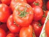 诊断番茄是否缺硼?